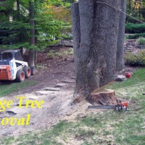 Fairfax Station Tree removal