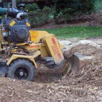 Fairfax Station Stump grinding