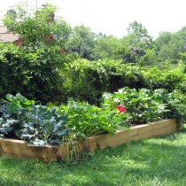 Vegetable gardening Fairfax Va.