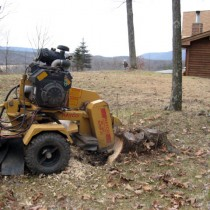 Stump grinding Northern Virginia