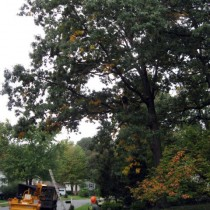 Tree Pruning Vienna Va.