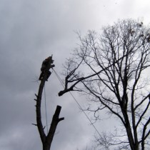 Tree Removal Northern Virginia