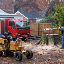 Stump Grinding Northern Va.