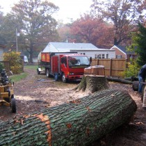 Tree Services Professional Property Maintenance Inc